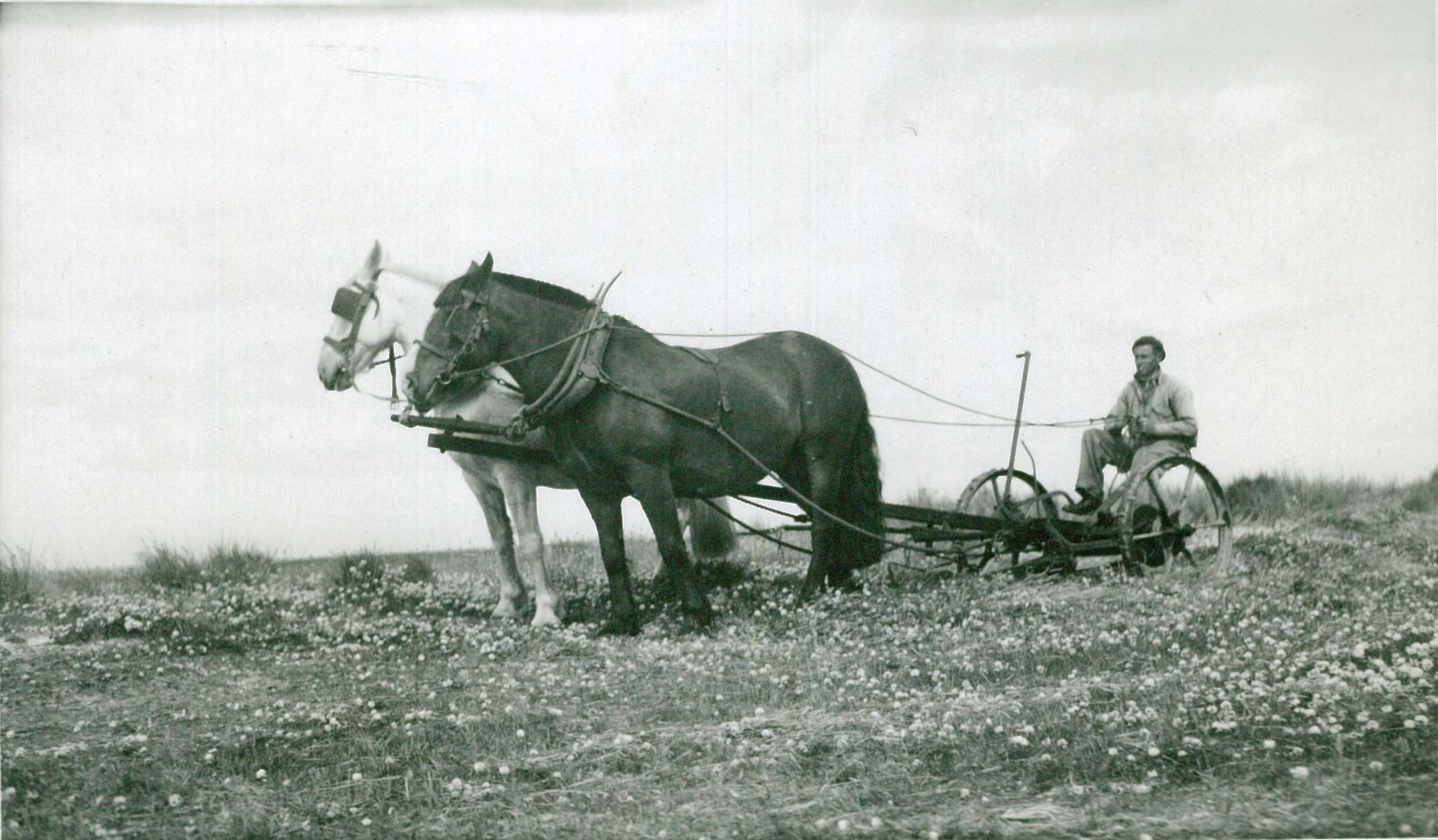 G Stewart mowing clover Rookery Bay Feb 1945